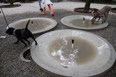 Abren área para perros en Parque México