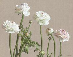 Mia Tarney - Ranunculus Picotee