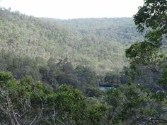 Wellington forest Countries Of The World, Western Australia, To Go, The Incredibles, River, Landscape, Places, Floral, Outdoor