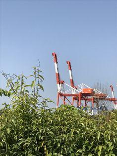 神戸 六甲アイランド ガントリークレーン 草原の中のキリンたち。On the Rokko Island in Kobe you can see the giraffe (gantry crane) in the meadow.