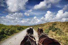 Pferdetaxi auf Juist <3 #juist #nordsee
