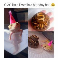 Correction, a gecko. Funny Lizards, Cute Reptiles, Les Reptiles, Reptiles And Amphibians, Pet Lizards, Funny Animal Memes, Cute Funny Animals, Funny Animal Pictures, Cute Baby Animals