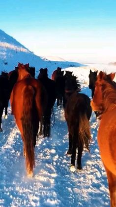 Horses And Dogs, Cute Horses, Horse Love, Wild Horses, Beautiful Horses, Animals Beautiful, Farm Animals, Cute Animals, Carnival Of The Animals