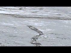 (aquanetviet.org) - Quái vật Lagarfljótsormurinn được tìm thấy ở hồ tại Iceland | Vietnam Aquaculture Network - Mạng Thủy sản Việt Nam