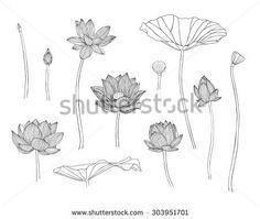 Vector illustration. Engraving hand drawn lotus flowers - stock vector