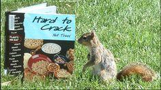 squirrel reading book Hard to Crack Nut Trees via Yorklib on Flickr