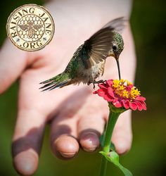 The Beauty of a Hummingbird makes the Heart Sing....