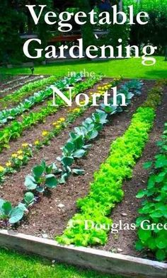 The necessary steps to take in setting up straw bale gardening instead of using the garden soil
