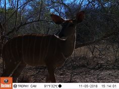 Trailcam Fun -  My first trail-cam post from Mozambique.