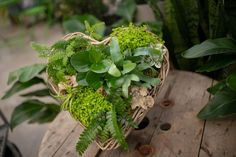 Your heart will skip a beat over this gorgeous tropical heart design! Filled with lush indoor plants, this wicker heart-shaped basket has all the shades of green and is accented with natural wood and moss. Definitely a WOW gift or addition to your home.  www.westcoastgardens.ca #valentines #indoorplants Indoor Tropical Plants, Tropical Garden, Natural Interior, Natural Home Decor, House Plants Decor, Plant Decor, Outdoor Planters, Garden Planters, Phalaenopsis Orchid