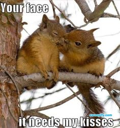 Your Face Needs My Kisses #humor #lol #funny