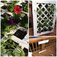 Vertical Garden Project: Final Thoughts #DigIn #Ad - (a)Musing Foodie