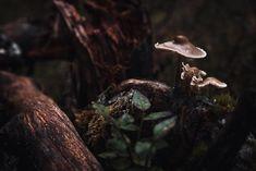 Mushrooms in dark autumn forest landscape Dark Autumn, Autumn Forest, Dark Forest, Forest Photography, Photography Series, Fine Art Photography, Professional Lightroom Presets, Lightroom Tutorial, Forest Landscape