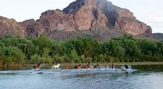 United States Forest Service, Tonto National Forest Service: Manage the Salt River wild horses humanely.  Take removal off the table.