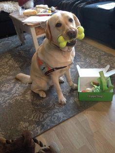 Carmen - DoggieBag.no #DoggieBag #Hund #Labrador #Servicehund #Dog