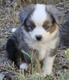 This is why i need a large piece of land, I need at least 8 of the dogs I have seen tonight on Pinterest...