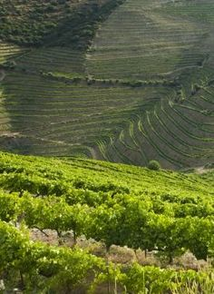 Quinta do Seixo - Visitas - Sogrape Vinhos