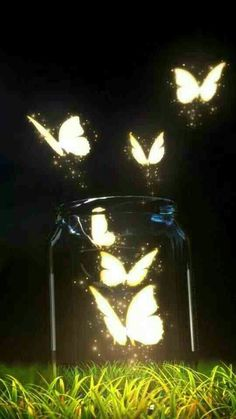 I wish I could cross Butterflies with Fireflies, and let them out in the back yard. ~~ Houston Foodlovers Book Club