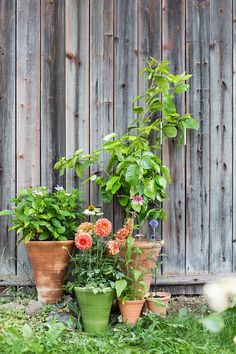 Gardening. Pots by Mikaela Willers