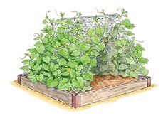 {cucumber farm}