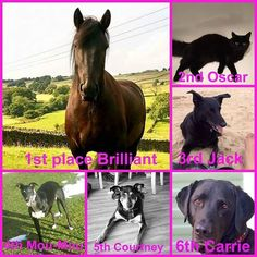 The results for Black Beauties Judged by Spook Laycock  1st: Stephanie Coatesworth and Brilliant  2nd: Emma Burns and Oscar  3rd: Louise Chilvers and Jack  4th: Sian Greenock-hulme and Mou-Mou 5th: Emma Louise Telford and Courtney  6th: Liz Billings and Carrie  #blackbeauties #animals #photos #horse #dog #cat #charity