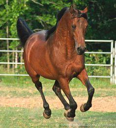 Гуцульський кінь сьогодні має достатньо широке застосування в ко-  лективних, фермерських і лісових господарствах, а також у господарстві і по-  буті громадян.