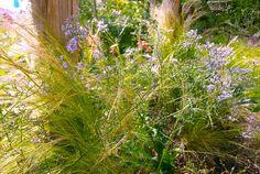 plantes vivaces VENTE  les jardins de hurlvents auvergne