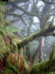 Paseando en la selva: disfruta de una excursion en la natura mas selvaje y virgen que la Gomera todavia conserva intacta