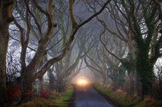 The Dark Hedges, Un tunnel darbres en Irlande, comté d'Antrim (hêtres centenaires) Photo