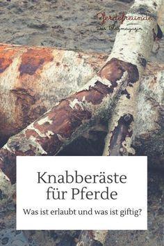 Knabberäste für Pferde: Welche Sträucher und Bäume sind erlaubt?