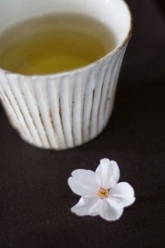 oolong tea and cherry blossom