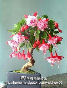 fuchsia bonsai | 這花有很多名稱,有人稱吊燈花、燈籠花、寶蓮燈 ...