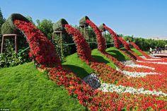 The Dubai Miracle Garden features over 45 flower species imported from all over the world A multitude of shaped archways, flowerbeds and structures can be seen at the site. Blooming Flowers, Large Flowers, Flowers Garden, Flower Pots, Flower Gardening, Flower Ideas, Lawn And Garden, Garden Art, Garden Design