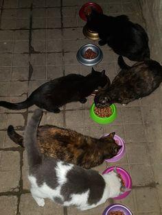 Boston Terrier, Dog Cat, Cats, Animals, Gatos, Animais, Animales, Kitty Cats, Animaux
