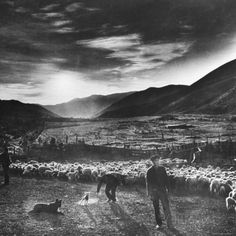 Basque Shepherd, Recent Immigrant from Macaye, France Photographic Print by Carl Mydans at AllPosters.com