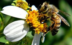 3 cities in Oregon ban bee killing pesticides - this article is about the 1st one