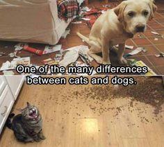 #funny #Animals
