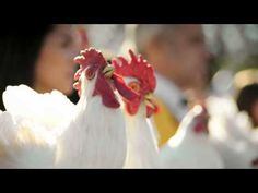 Chickens are hot lately. Remember the campaign from Mercedes-Benz with the magic body control? Well now you have a dozen of chickens 'singin...