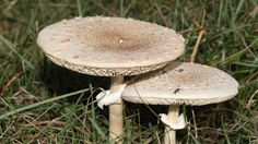 How to Grow and Get Rid of Mushrooms in the Yard