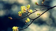 flowery tree branches | including-a-branch-of-the-tree-full-of-flowers-great-atmosphere-apple ...