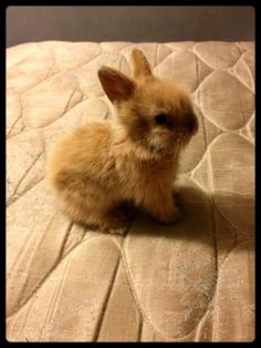 ALL THE CUTE!! Baby bunny ❤️