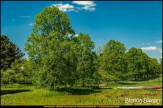 Britzer Garten #BritzerGarten #Britz #Neukölln #Berlin #Deutschland #Germany #biancabuergerphotography #igersgermany #igersberlin #IG_Deutschland #IG_berlincity #ig_germany #shootcamp #pickmotion #berlinbreeze #diewocheaufinstagram #berlingram #visit_berlin #canon #canondeutschland #EOS5DMarkIII #5Diii #landschaft #landscape #berlinworld #germany_fotos #sightseeing #Baum #tree