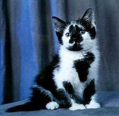 black & white kitten ~ cute :)