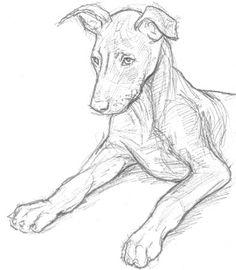 older puppy