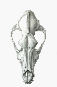 43 best dog skull images on Pinterest | Dog skull, Animal skulls and ...