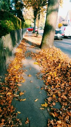 #autumn #follow#like#way#tree#Germany#heiligensee#cold