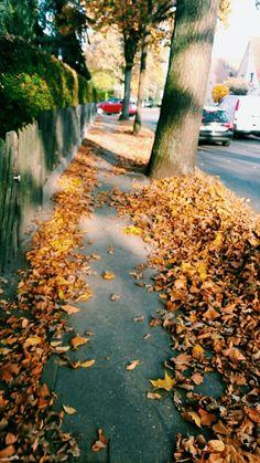 #autumn #follow#like#way#tree#Germany#heiligensee#cold