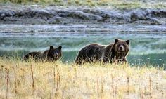 Hunter shoves arm down grizzly bear's throat to stave off attack | World news | The Guardian