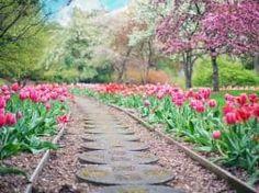 La primavera è alle porte e sarai presto preso da una frenesia di semina, crescita e coltivazione del seme. Approfitta di questi mesi invernali più tranquilli per organizzare il tuo giardino. Ecco qualche consiglio per preparare il tuo giardino per la primavera.