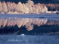 【行ってみたい場所】 初冬の貴婦人(栃木県 日光市 小田代ヶ原) | ナショナルジオグラフィック日本版サイト Japan Landscape, Nikko, Snow Scenes, Beautiful Scenery, Four Seasons, Cool Photos, Environment, Wallpaper, Winter
